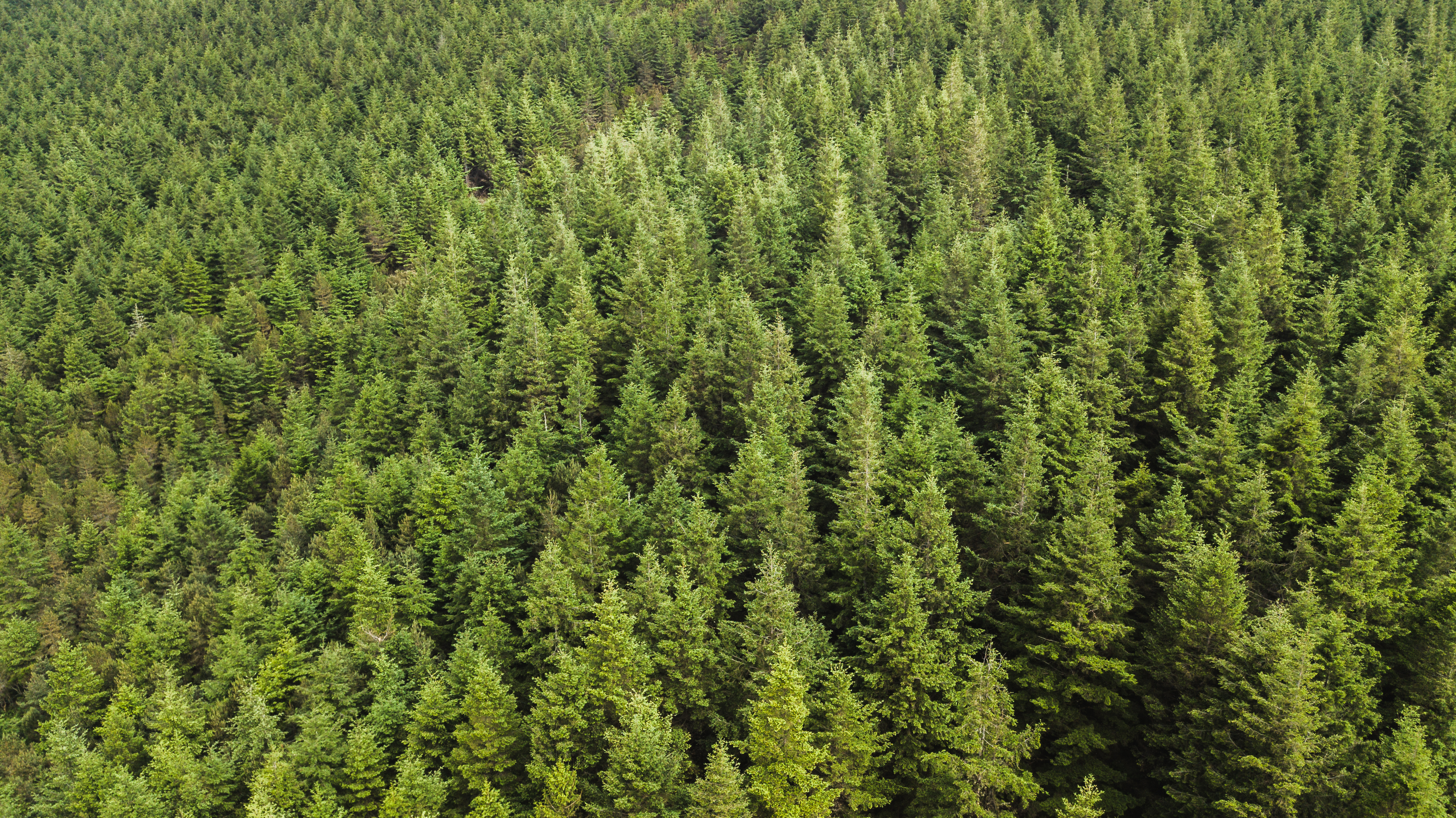 Forestry and Conservation (AS)